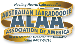 Healing Hearts Labradoodles ALAA International Logo - Copy (2)